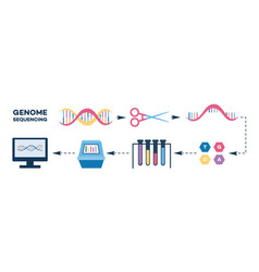 Infographics genome sequencing stages flat vector
