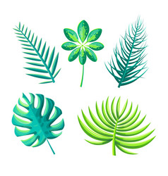 leaf of exotic plants set vector image
