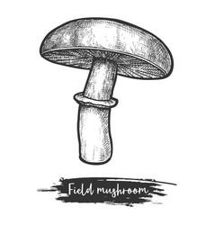 Meadow or field mushroom vintage vector