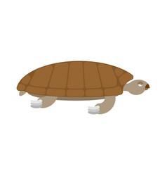 Sea turtle isolated sea animal terrapin on white vector