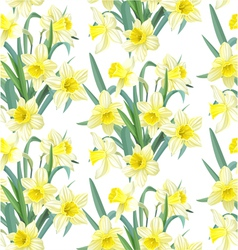 Seamless pattern lush yellow daffodils on white vector