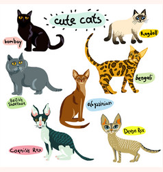 set of cartoon cats characters vector image