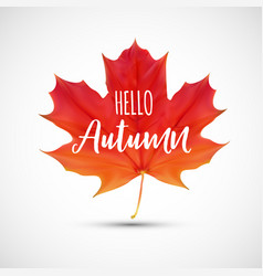 Shiny hello autumn natural leaves background vector