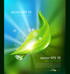 green leaf and a drop of dew vector image vector image