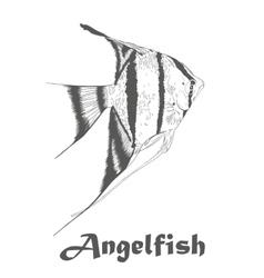 Angel fish Pterophyllum species originate vector