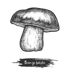 Cut mushroom bronze bolete vector