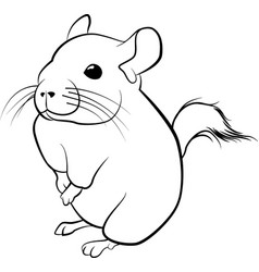 cute chinchilla line art black line vector image