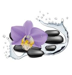 Orchid flower water splash and zen stone vector