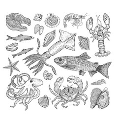 seafood big collection with crab lobster vector image