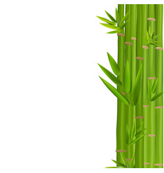 Colorful stems and bamboo leaves vector