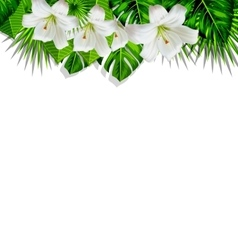 Frame branch tropical leaves and white flowers vector image
