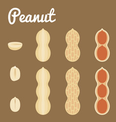 peanuts of a set of peanuts vector image vector image