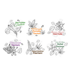 Collection engraved monochrome tincture labels vector