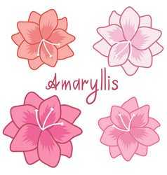 Cute amaryllis set colorful hippeastrum vector