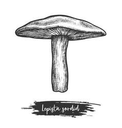 Sowerby pat mushroom sketch or lepista sordida vector