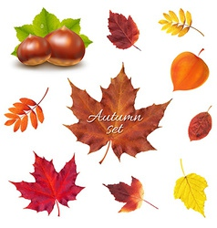 Autumn Set vector
