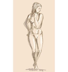 Drawing of the female human anatomy figure vector