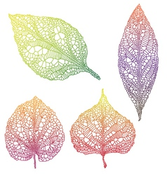 vein leaves vector image