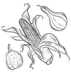 corn sketch vector image vector image