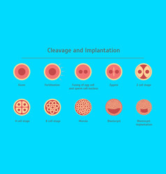 cartoon in vitro fertilization icons set vector image