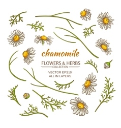 chamomile elements set vector image