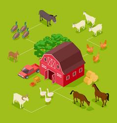 isometric farm concept livestock farm vector image