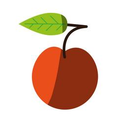 juicy sweet fresh fruit vector image