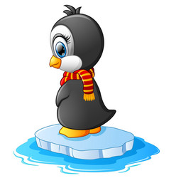 little penguin on a bit of ice vector image