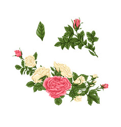 Set pink and white roses bouquets flowers and vector