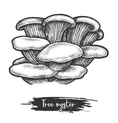 Sketch pearl or tree oyster mushroom vector