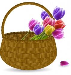 tulips in a wicker basket vector image