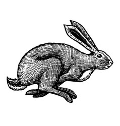 Wild hare or rabbit is jumping cute bunny or vector