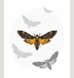 Butterfly Deaths head Hawk moth vector image vector image