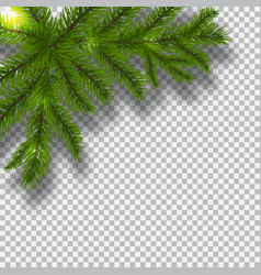Green branches of a christmas tree on a checker vector