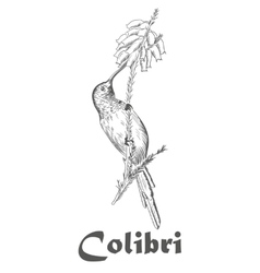 Hummingbird and flower coloring book for adults vector image
