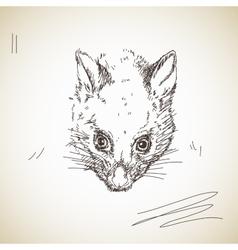 possum muzzle vector image