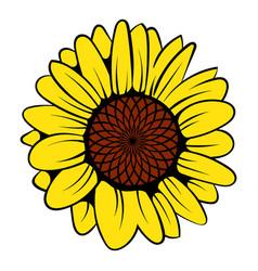 sunflower icon icon cartoon vector image