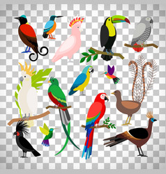 exotic tropical birds on transparent background vector image