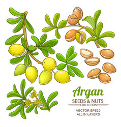 Argan branches set vector
