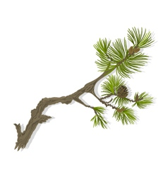 Branch of Christmas tree mountain Pine branch vector