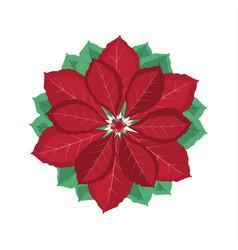 christmas poinsettia flower vector image
