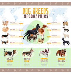 dog breeds infographics vector image