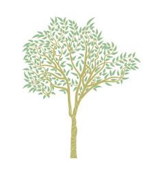 eucalyptus tree design vector image