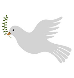 isolated pigeon icon vector image
