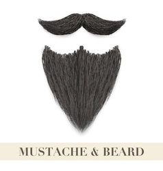 Realistic Black beard with curly mustache vector image