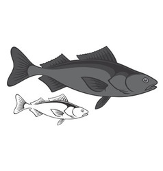 Sablefish vector image