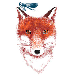 hand drawn fox and dragonfly vector image