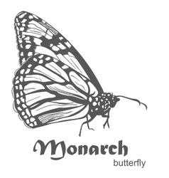 The Monarch butterfly Danaus plexippus vector image