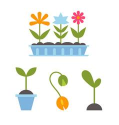 spring plants in pots vector image
