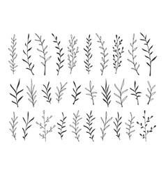 hand drawn botanical decorative design elements vector image